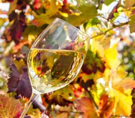 Weinglas mit Weißwein im Herbst-bunten Weingarten