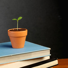 Young plant on stack of books