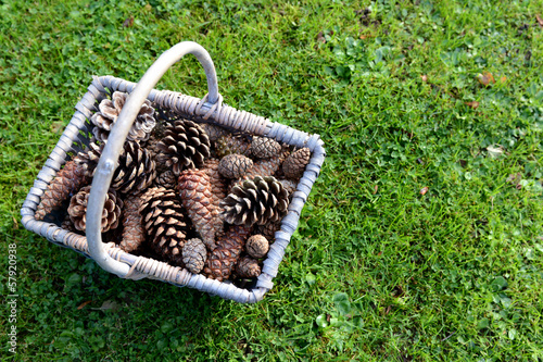 Rustic basket full of pine cones on grass