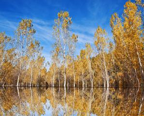 el lago en otoño