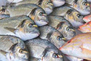Sales of fresh fish on the market