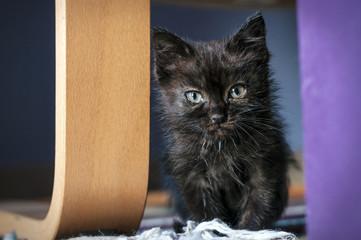 piccolo gatto nero