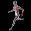 Uomo in corsa muscoli corpo umano