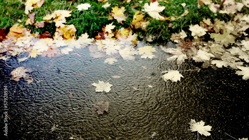 Merry rain dripping into a puddle of cold autumn