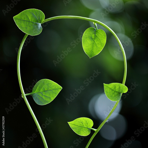 Fresh green leaves for backgrounds