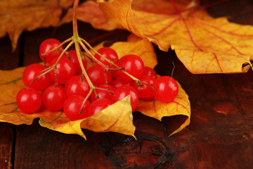Red berries of viburnum with yellow leaves on wooden background
