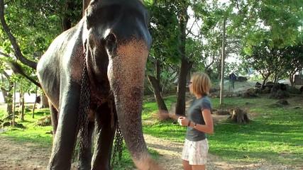 Girl feeding the elephant by bananas.