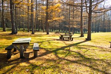 三本松園地のベンチ