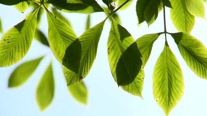 листья крупным планом