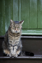 traurige Katze vor der Haustür