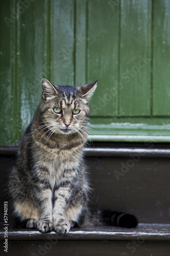 sad cat on doorstep