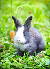 Funny baby rabbit in grass