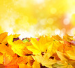Autumn background with maple leaves. With copy space