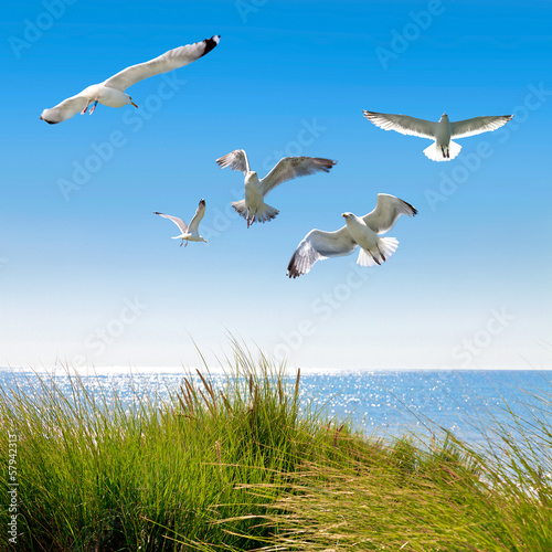Gulls on the dunes to the sea.