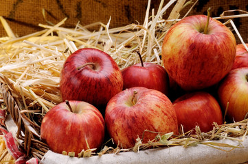 basket of delicious red apples