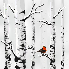 Birch in snow, winter card in vector