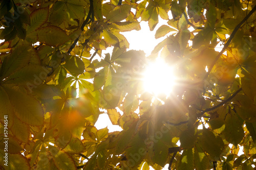 Autumnal leaves and sunlight