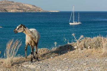 Paesaggio isole greche