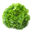 Curled Lettuce
