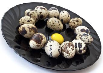 quail eggs on a plate isolated