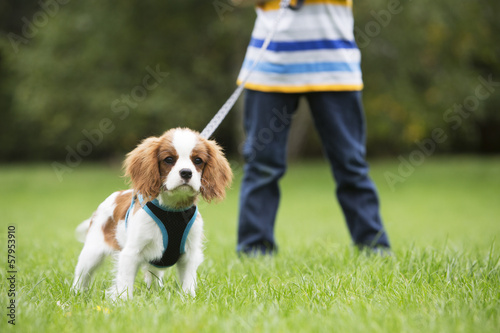 Boy Taking Puppy For Walk On Lead