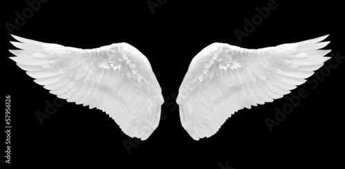 Foto op Plexiglas Eagle white wing isolated