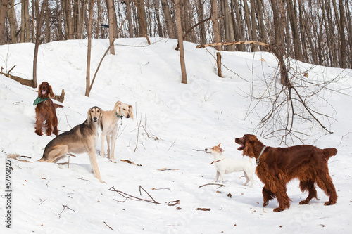 Five dogs meeting