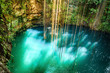 Hanging roots in Ik-Kil Cenote near Chichen Itza, Mexico