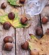 Forest hazelnuts