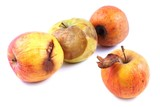 Apples, wilted, rotten on a white background poster