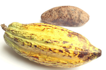 Cacao fruit and cocoa bread