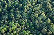 aerial view of  forest - 57968920