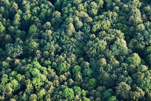 Deurstickers Luchtfoto aerial view of forest