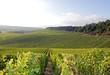 Vignobles de Chablis (Bourgogne France) - 57969310