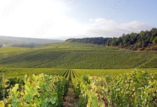 Fotobehang Cultuur Vignobles de Chablis (Bourgogne France)