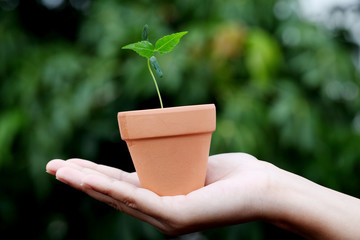 Hand holding a baby plant