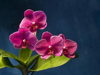 orchidee auf metall