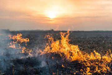 Burning of straw