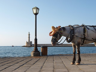 Horse in hat on sea quay with lighthouse