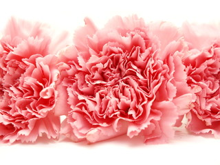 Three pink isolated carnations on white background