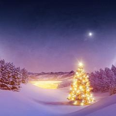 Beleuchteter Christsbaum Im Wald