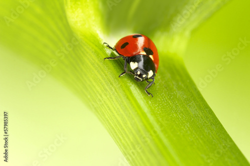 ladybug on a flower stalk