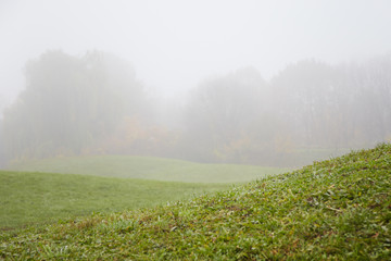 green field in thick fog