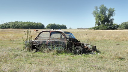 Car Wreck and Calf Grazing, Landscape