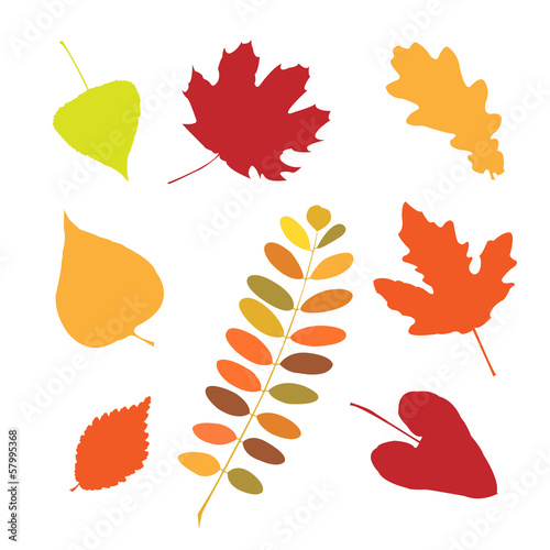 Set of different autumn leaves