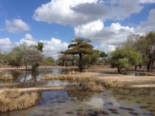 savana africa
