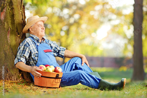 Male worker in dungarees with basket full of harvested apples