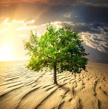 Zielone drzewo na pustyni