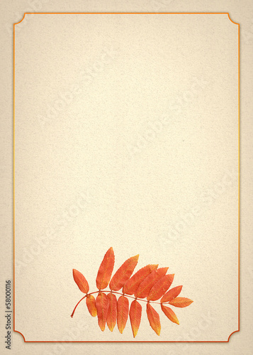 a beige watercolor paper with a border and mountain ash branch