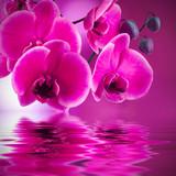 natural floral background, spa concept